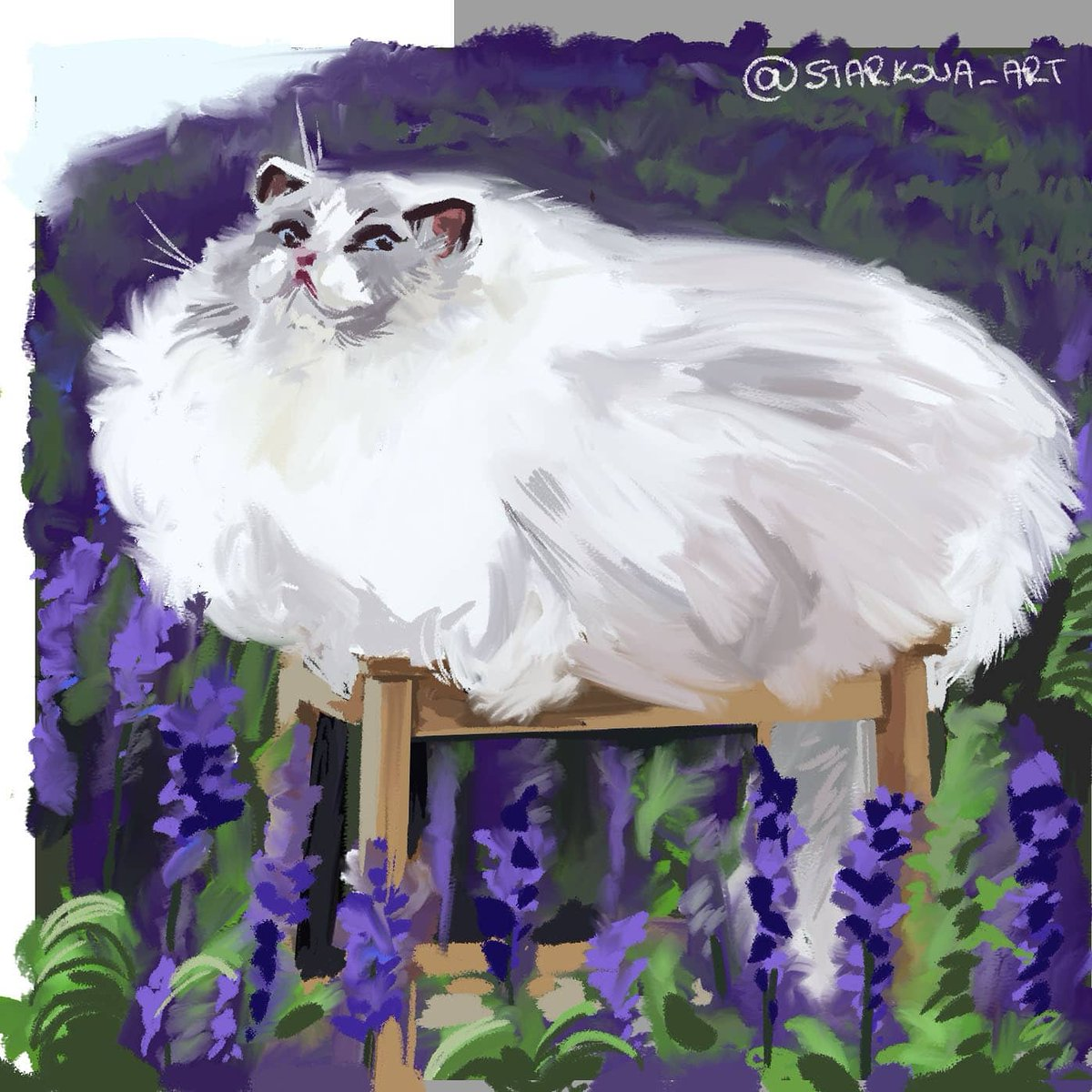 I am doing studies of cats, the first one is @sweetheartragdo because oh god, I am in love. The second is a stock image, that I cant find the source for but the lighting is gorgeous. Here is how we keep sane in these trying times. https://t.co/cZ5EYGV50N