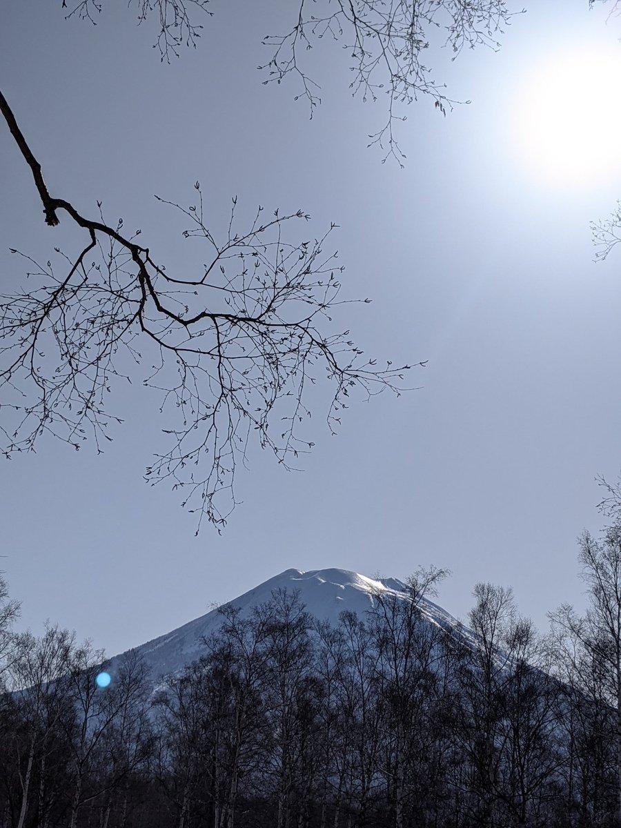 おはようていざん🏔今朝の羊蹄山は輝いています✨今日も良いお天気になりそうです。  #ヒルトンニセコビレッジ #ニセコ  #羊蹄山 https://t.co/uDiSvkV4es