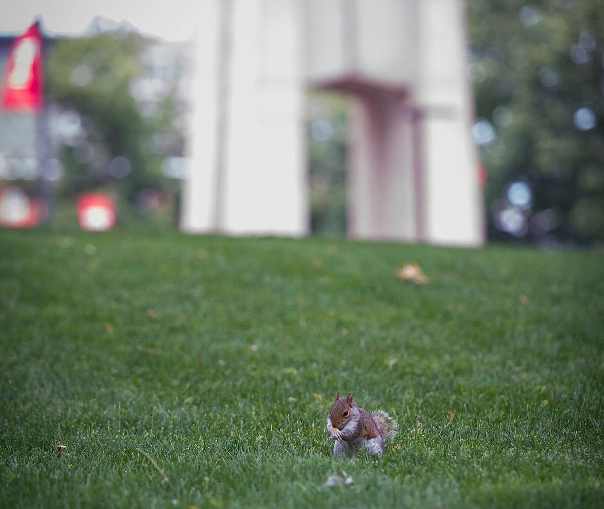 Squirrel update. 🐿