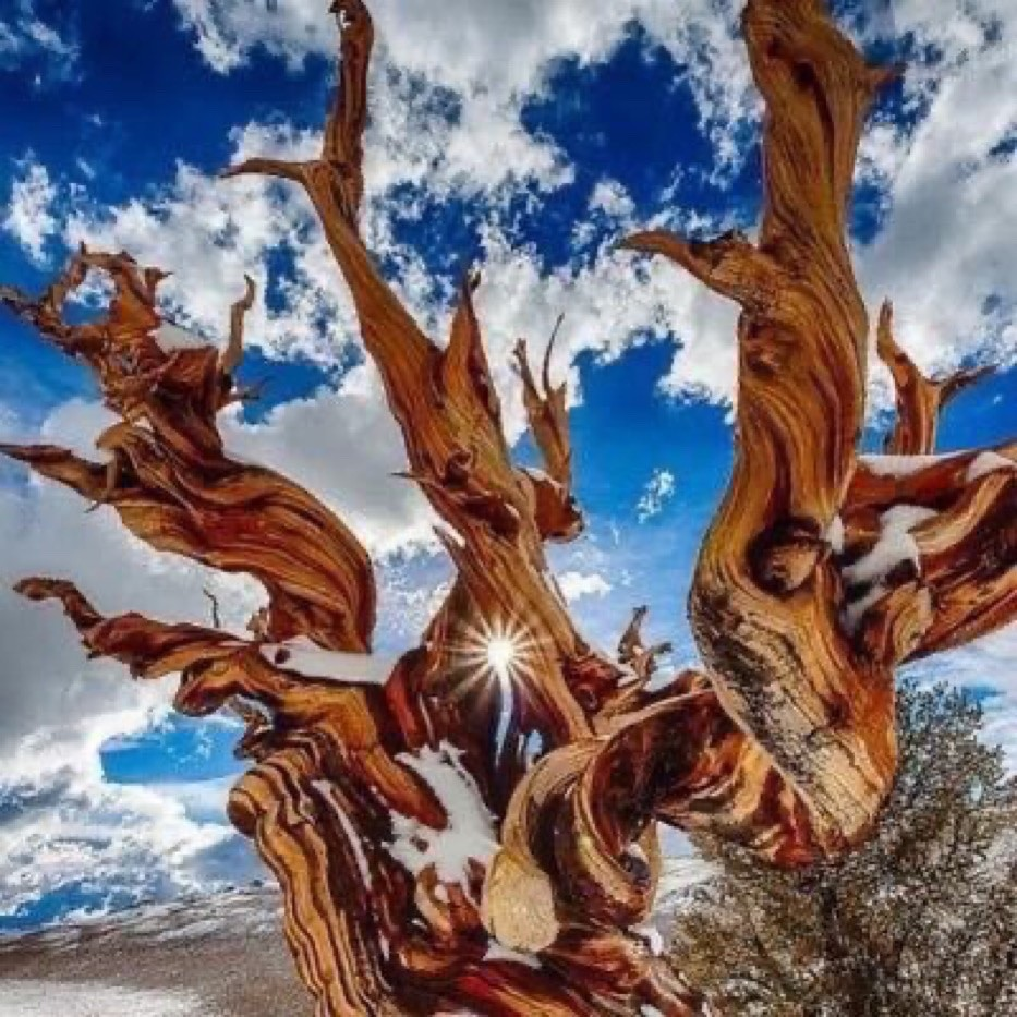 ❦Greatness is often achieved through great loss. ~Anne Scottlin #inspirationalquote #bristlecone #pine #pic #anon #inspiration #hope #couragepic.twitter.com/G7wBJhCvZR