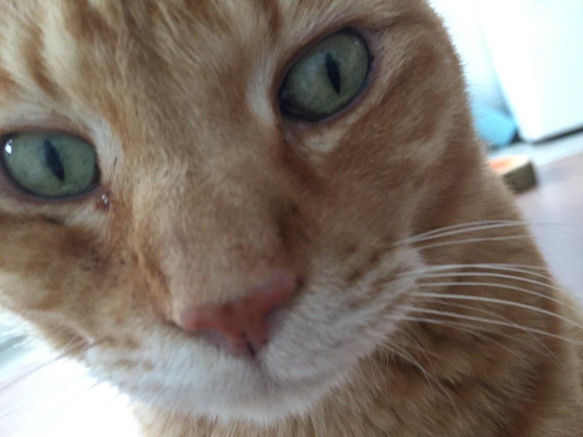 本日の猫ヨガは、コロナ対策の一環として中止になりました。 また来月、開催出来ることを願います♬ 猫カフェは12時オープンです(^^)  お花見ならぬお鼻見をお楽しみくださいw 【事務局】 #保護猫カフェ #猫カフェ #板橋 #里親募集 #里親会 #譲渡会 #猫雑貨 #YouTube #お鼻見  @ CAT'S INN TOKYOpic.twitter.com/b0x08e7b2s