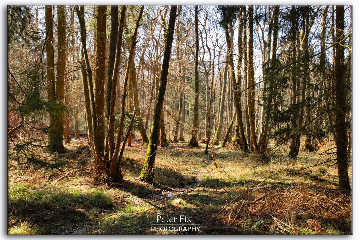 Out in the Woods  #landscapephotography #naturelovers #countryside  #nature #myphoto #forest #trees #photooftheday #staysavepic.twitter.com/nDfKVib1dd