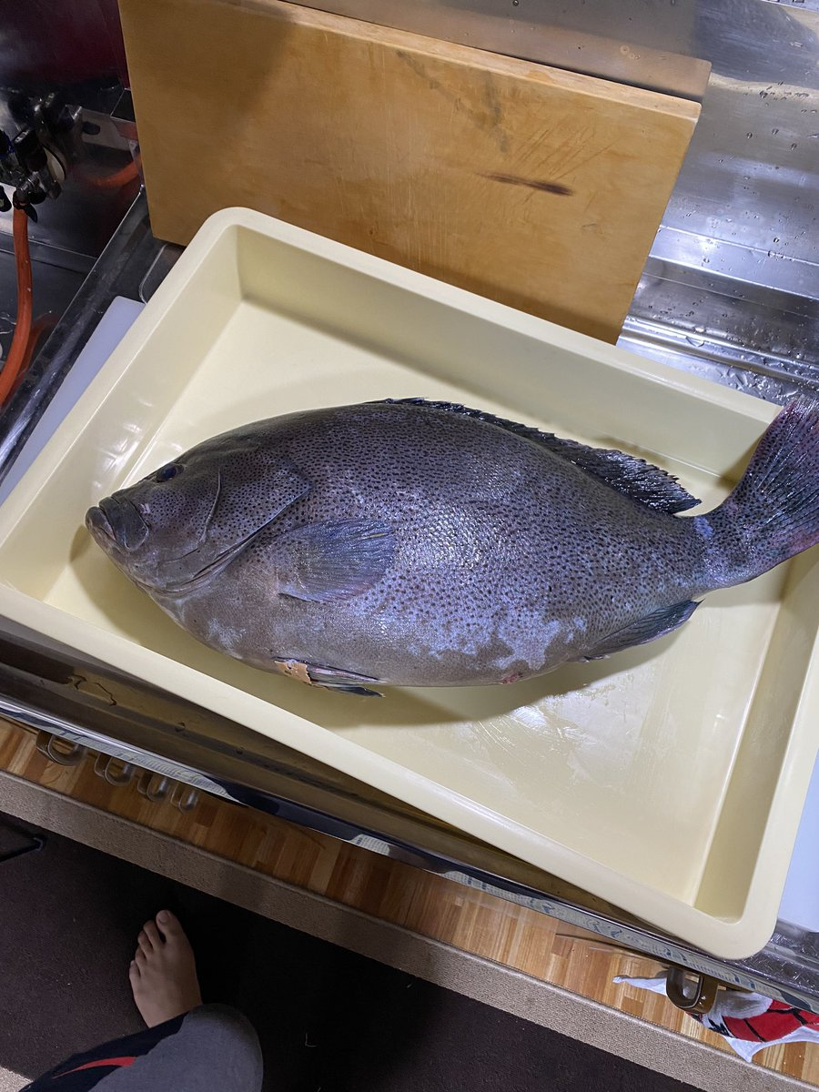過去一うまかったかもしれん。この魚。マジの幻の魚が入りました。全身バターみたいな魚。お値段も過去最大です。。。どうしよ  @YouTubeより