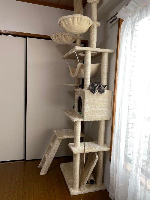 あれ? 天使が家にいる……?キャットタワーでお顔を並べて眠るネコちゃんたちが目を疑うかわいさ -  @itm_nlabzoo