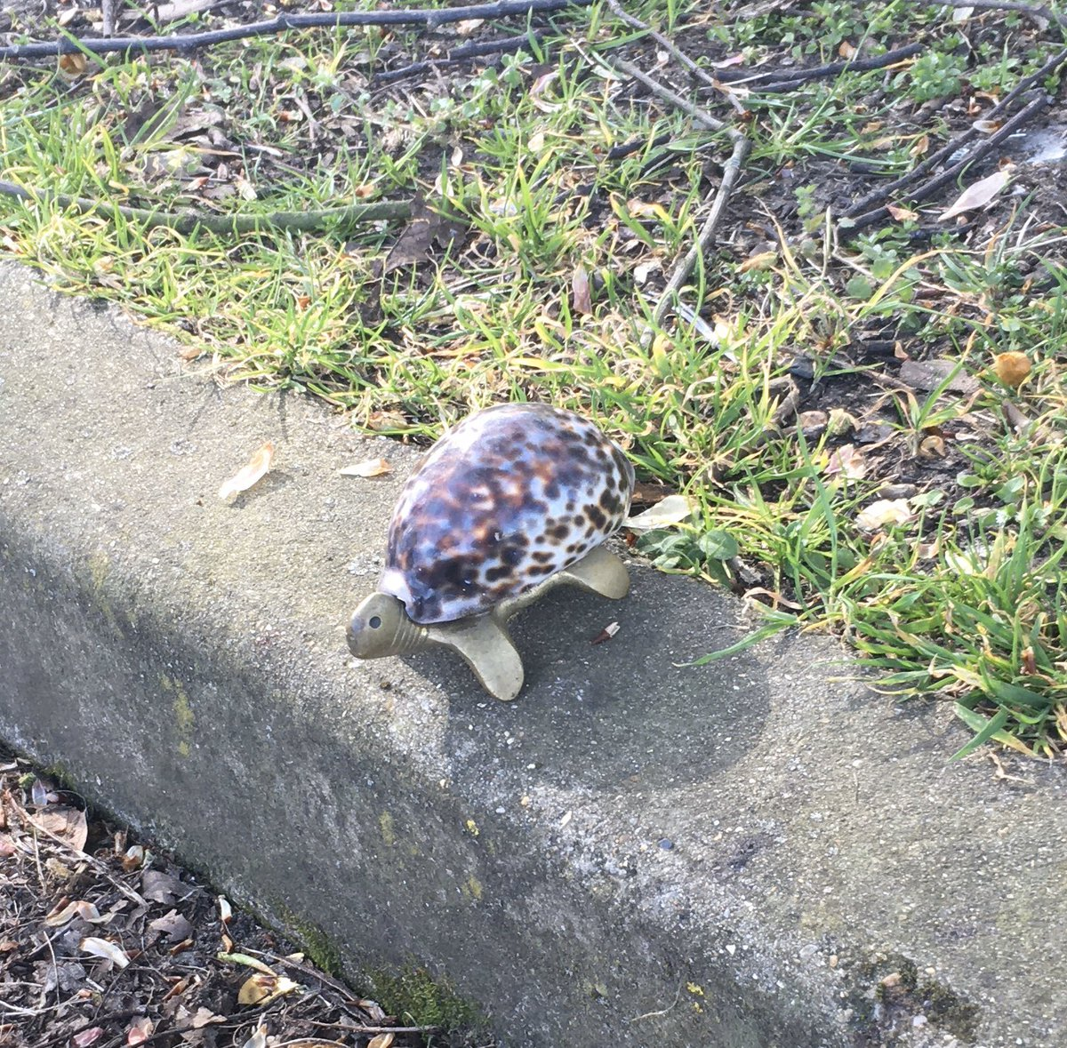 RT @SainiLiina: Tortoises are starting to come back to Crystal Palace Park. Nature is healing etc etc. https://t.co/gPpwxaFNYo