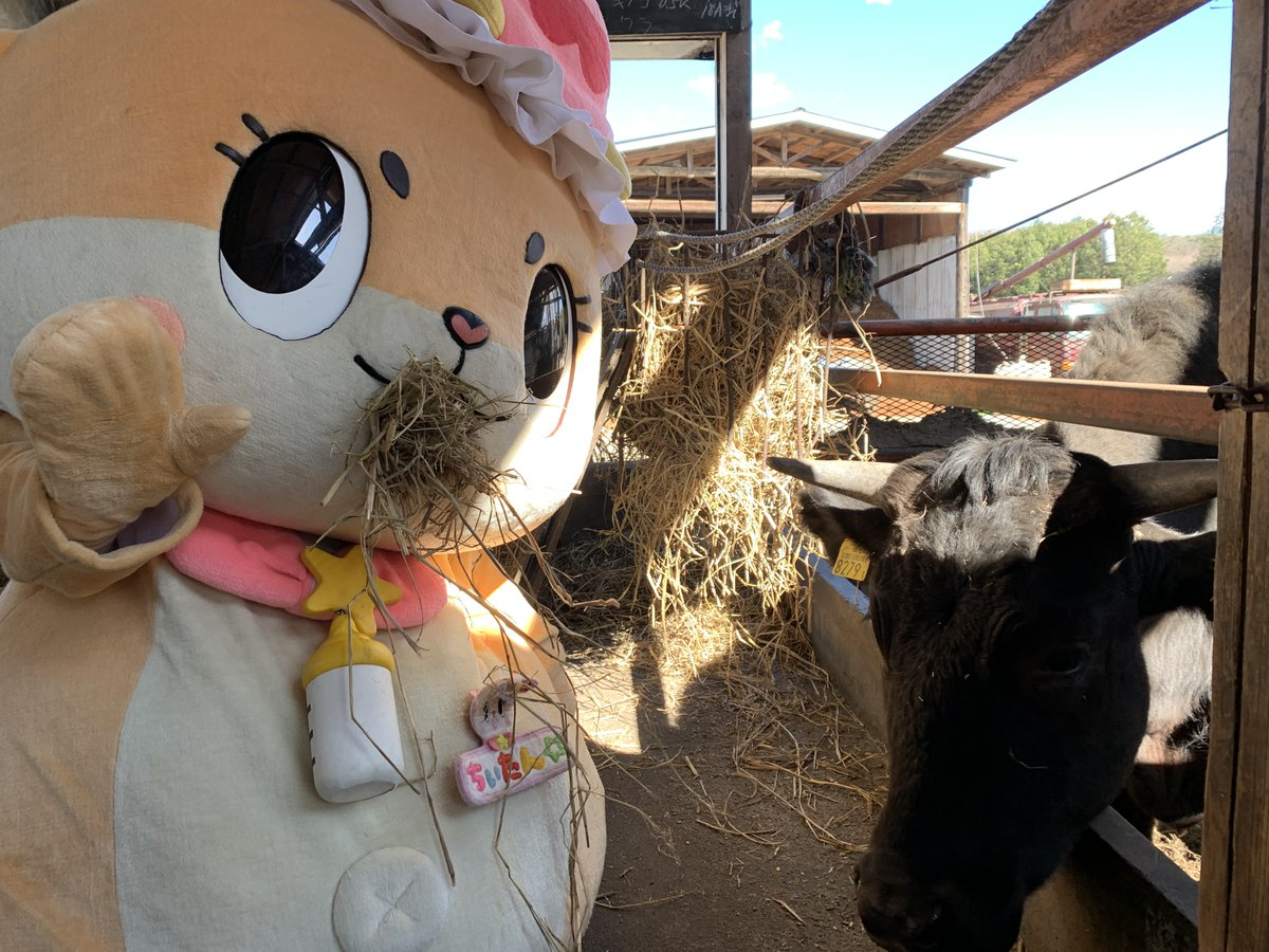 牛ちゃんと一緒にマジ草ですっ☆ちぃたん☆ですっ☆
