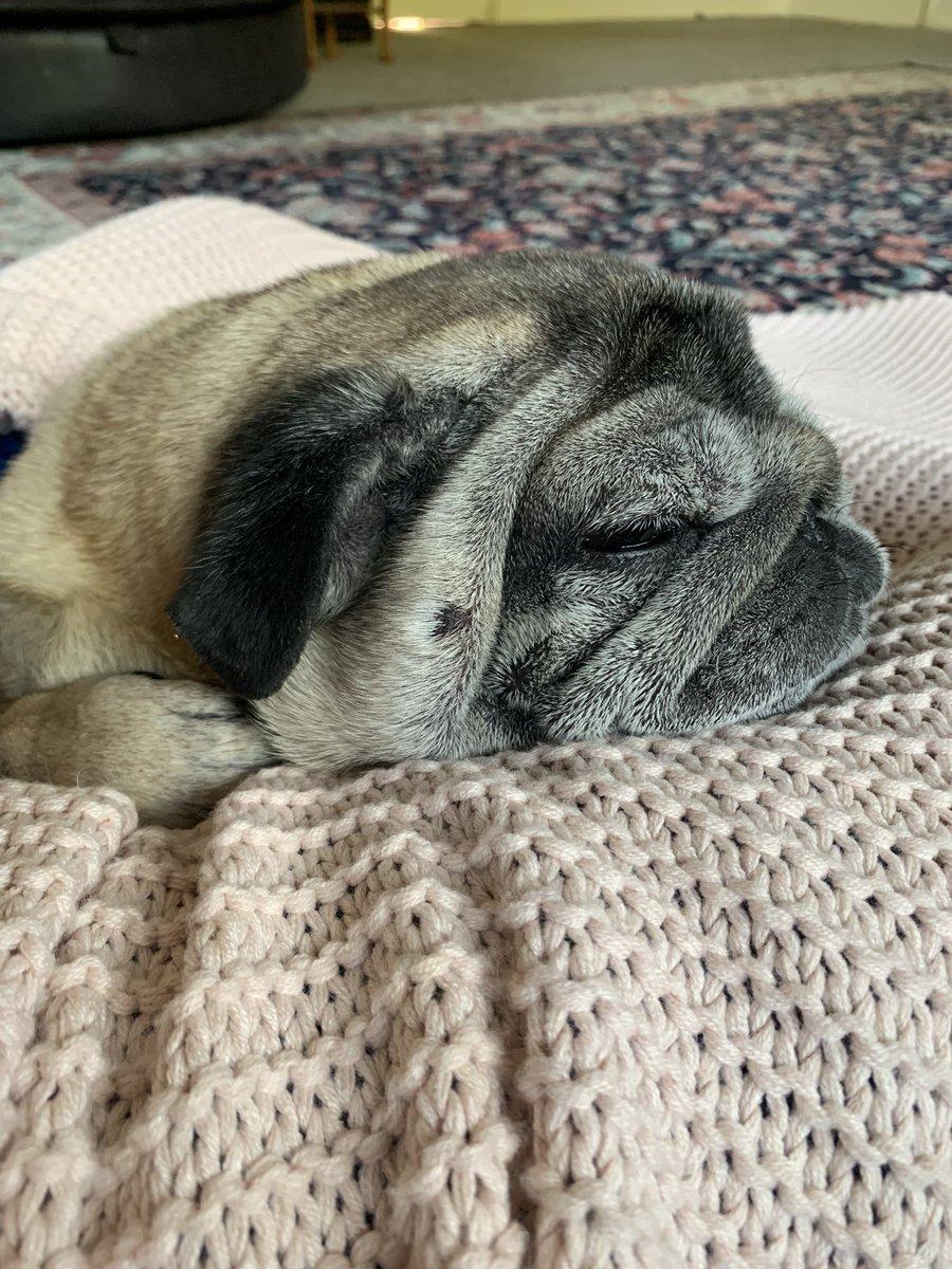 A big happy birthday to my little pug Baxter who is 10 today ...#pug #birthdaydog pic.twitter.com/kOOasMJUJG
