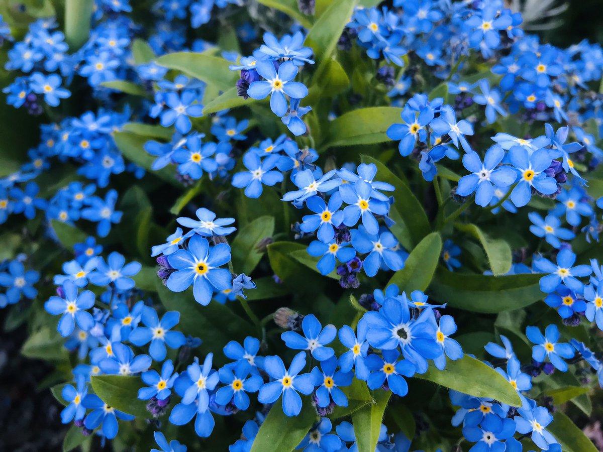 Un peu de #couleur... #photo #Photographie #photography #fleurs #Flowers #FlowerPower #nature #naturelovers #naturephotography #confinement #coronavirus #covid19pic.twitter.com/BFABREXEud