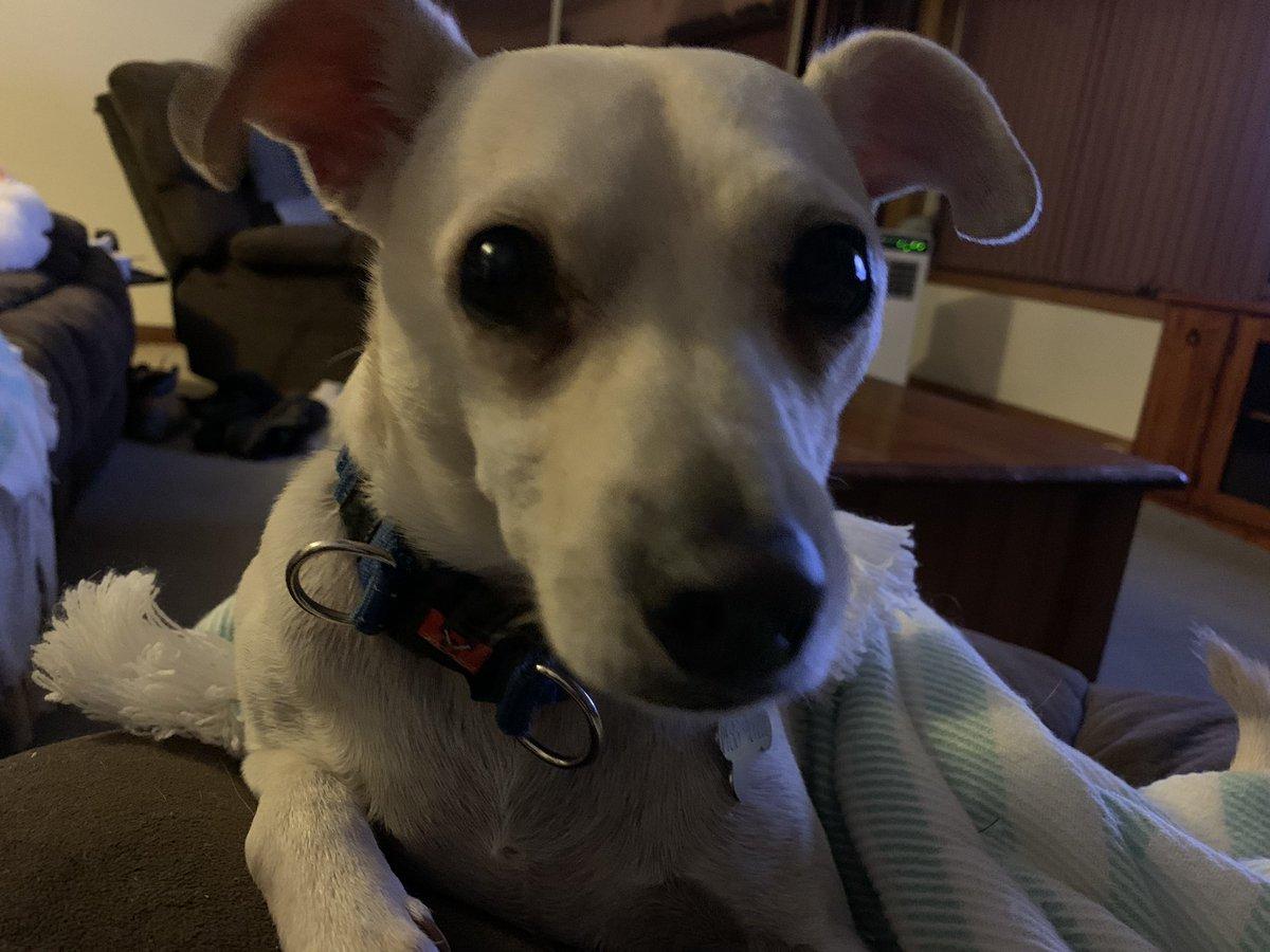 Dobby says Happy Dogday! pic.twitter.com/tUb8AIZ7IL