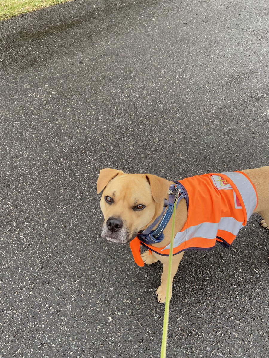 @myroyalmailuk As I have been delivering from my house I've had a little helper on the more isolated houses! #2birds1stone #humphrey #lovinglife @DT_Bridgend @DogsTrust<br>http://pic.twitter.com/uVlKpj6EGX