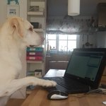 Image for the Tweet beginning: Working from home, like Bean,