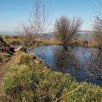 Image for the Tweet beginning: Spring comes to #ilkleymoor... Bilberries greening