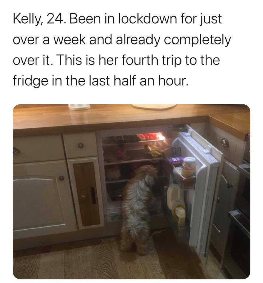 Remember #catteachers ? Well, this is kind of a dog version. The #lockdown account we all need right now: