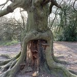 Image for the Tweet beginning: So overall winner Tree of