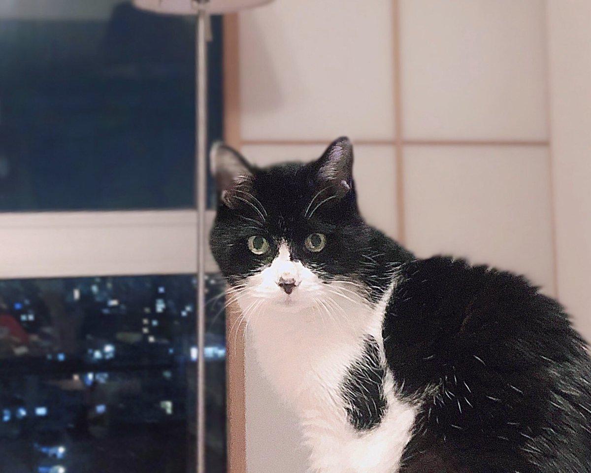 今日もみーこは元気です(・∀・)/  #猫のいる暮らし #シニア猫 #20歳pic.twitter.com/4V76iNxW3W
