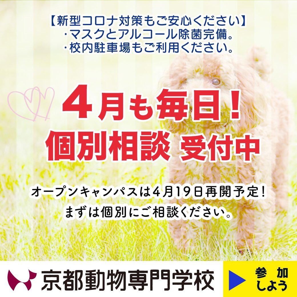 4月は1日と6日以外は平日の個別相談受付中です 車での来校も可能ですので、17時までお好きな時間でお申し込みください。  LINE申し込みは、お名前と希望日時をお知らせいただくだけでOKです http://nav.cx/8EwSqQK  #京都動物専門学校 #トリマー #動物看護師 pic.twitter.com/Pfdrs6PgI3