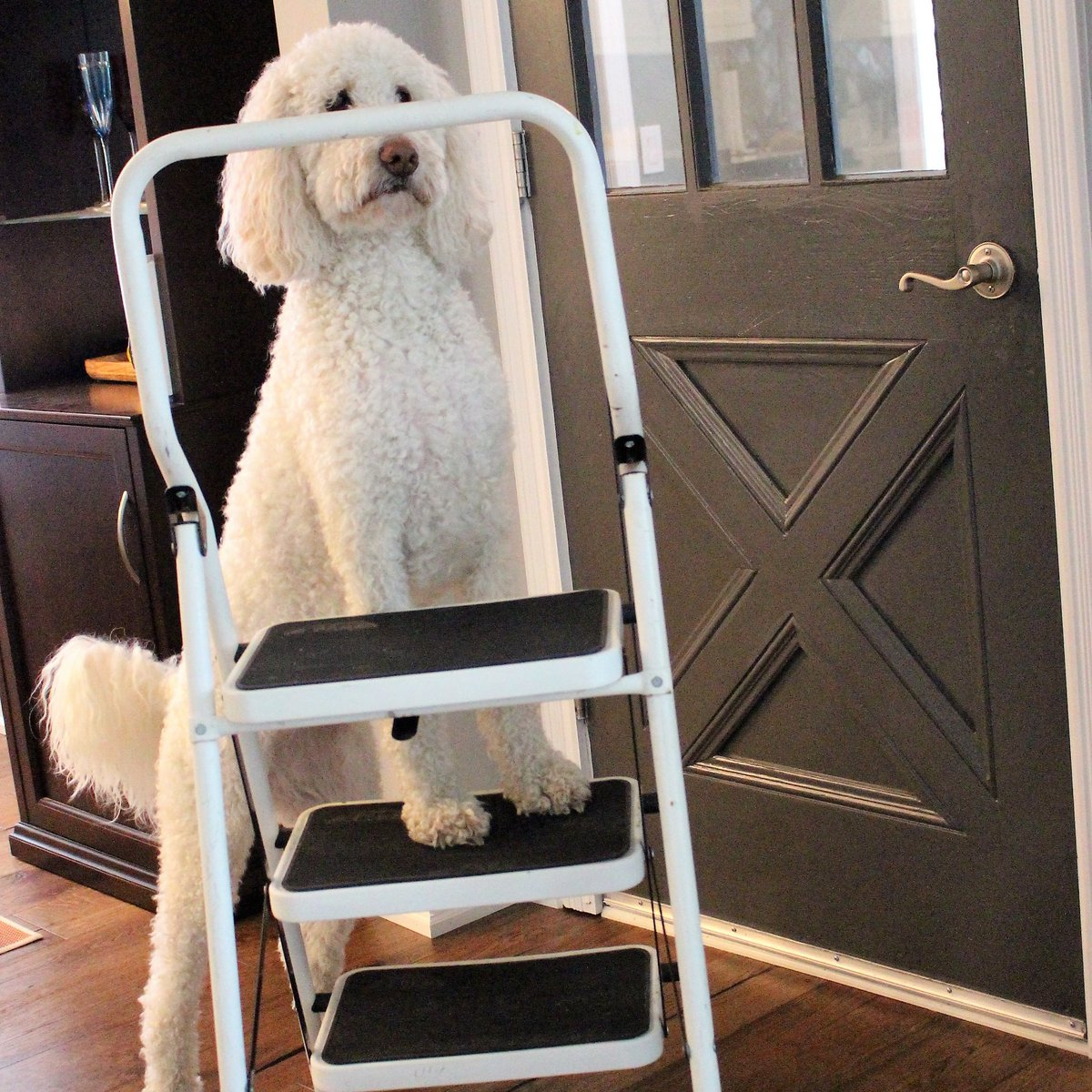 This is my step ladder. I never met my real ladder... Last I heard he was in the 12 step program #TuesdayThoughts  #tuesdayvibes<br>http://pic.twitter.com/XpvX4NuBLG