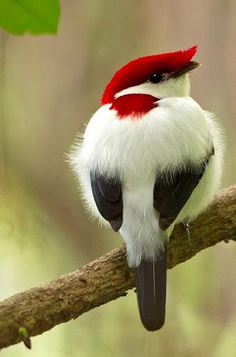 #tuesdaymood  Beautiful Rare #birds<br>http://pic.twitter.com/ZwCMQb0005