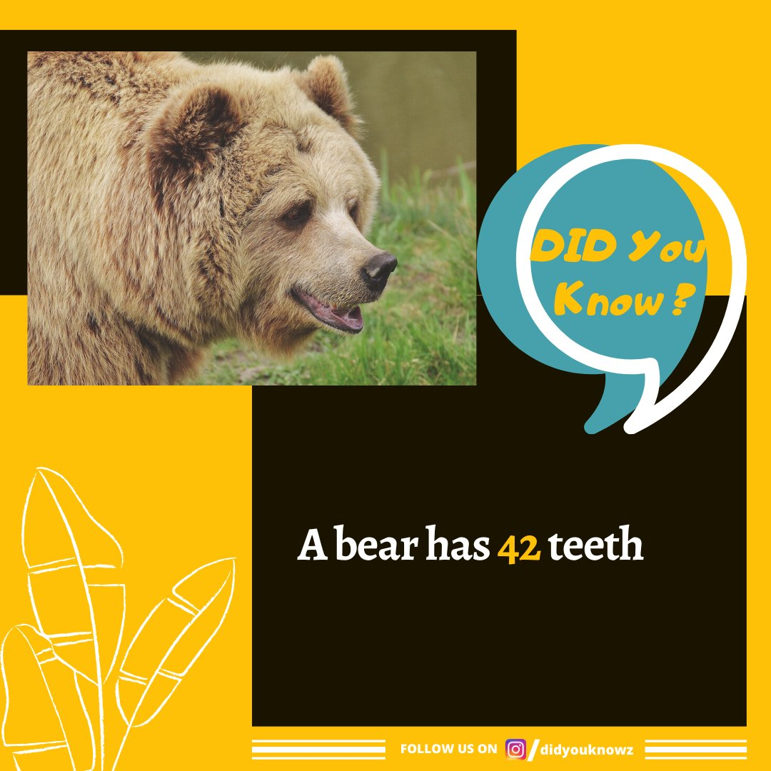 follow Us @didyouknowz for daily interesting facts a #bear has 42 #teeth Comment below what you think about this post #amazingfact #gyan #generalknowledge #factsonly #facts#amazingfacts #sciencefacts #instafact #instafacts #factz#animalfactspic.twitter.com/5tTMPBCXjs