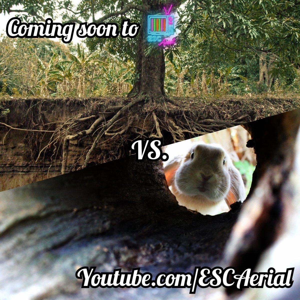 Sprouting soon at #ESCAerial. Youtube.com/ESCAerial #ESC2020