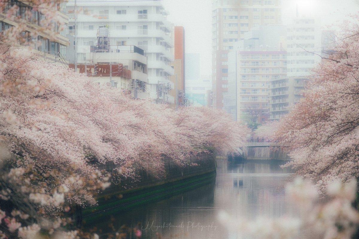 泡沫の春。  #terminal81film #photo  #PASHADELIC  #東京カメラ部 #ルミナーと私の世界  #fujifilm_xseries pic.twitter.com/wdnY4g1tha