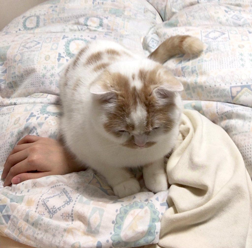 ホイちゃんや、一緒に寝るのはいいけどそこで寝られると飼主の血の巡りが止まるよ
