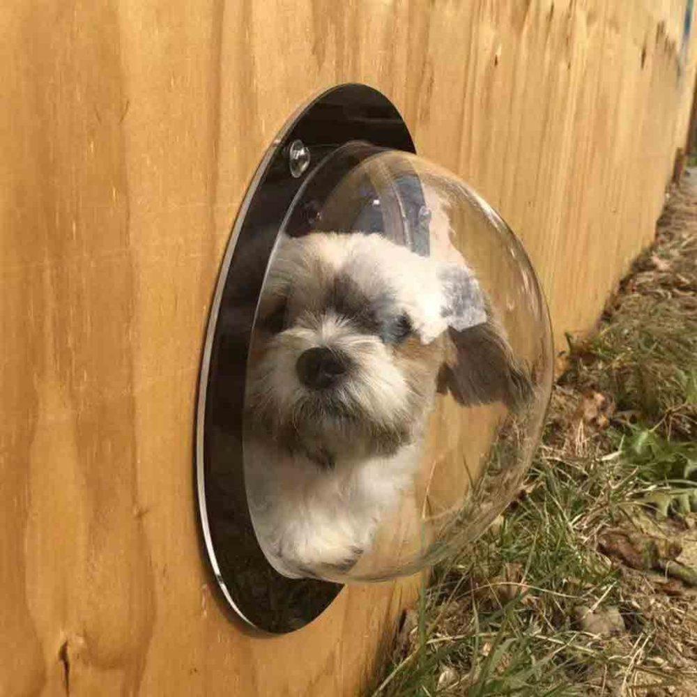 #dogstagram #dogs Dog's Fence Peek Window Bubble https://4pawzoutlet.com/dogs-fence-peek-window-bubble/…pic.twitter.com/fQNDW7sIpm
