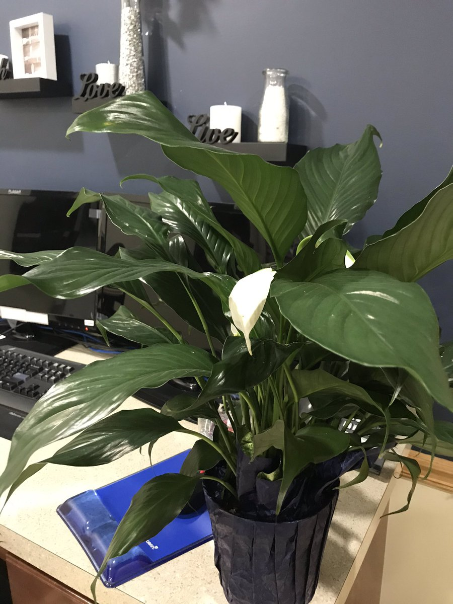 Got a wonderful gift of Pach Lily by the office staff for #doctorsday2020