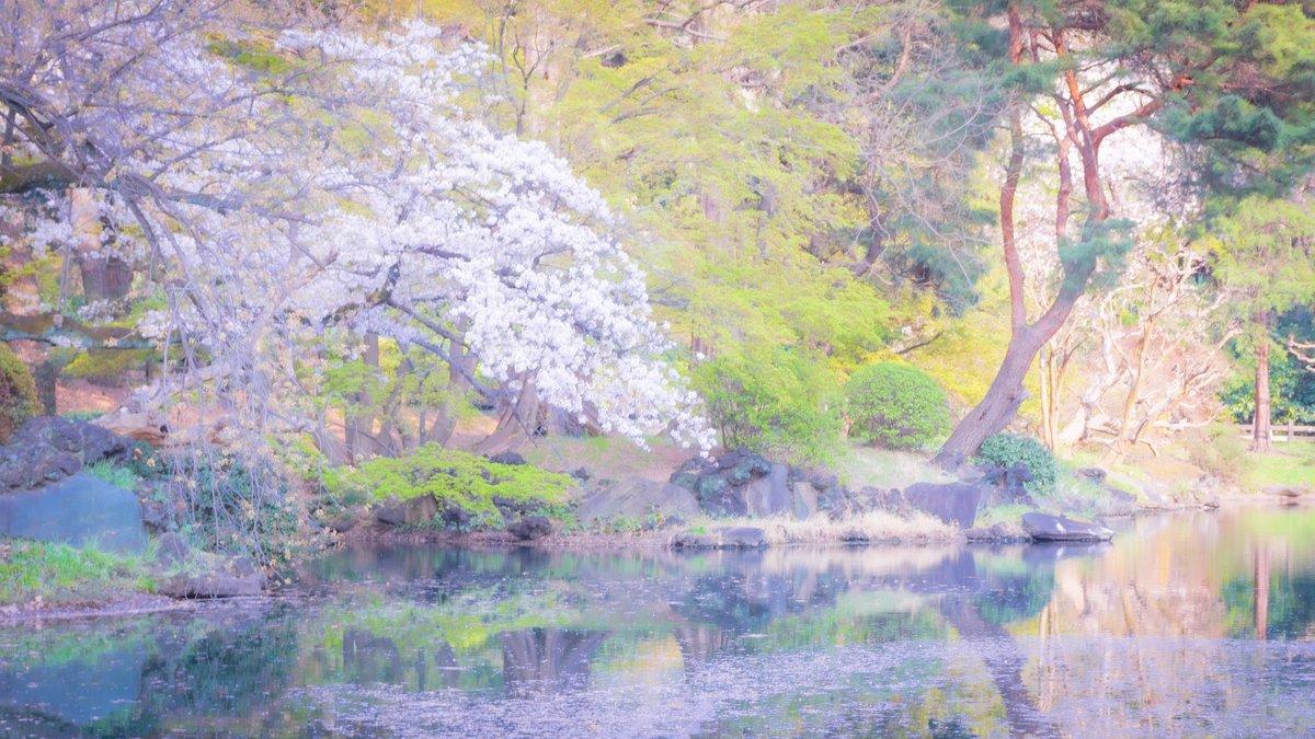 watercolor. * * * * * #ファインダー越しの私の世界 #写真で伝えたい私の世界  #写真好きな人と繋がりたい #写真撮ってる人と繋がりたい #写真の奏でる私の世界 #キリトリセカイ #あべちフォト #2019年の写真 #桜 #さくら  #今年も行きたい新宿御苑 #東京 #新宿御苑 #新宿 #coregraphy #photographypic.twitter.com/EIDcNcNPau