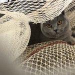 Image for the Tweet beginning: Kijken en ouwehoeren,😂 #visserij