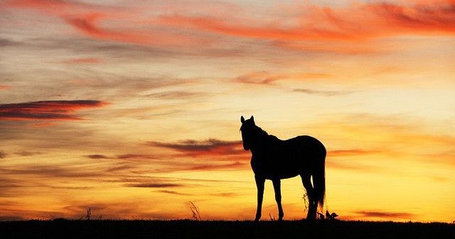 Have a peaceful and relaxing evening friends ! #friends #blessings #happiness #nature #hiking #camping #horse #horses #sunset #peaceful #beauty #outdoors #TuesdayThoughts pic.twitter.com/mmU3Jc3k9E