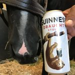 It's 5 o'clock somewhere! When you're America's Most Eligible Stud you get to enjoy a delicious Guinness at the end of a long day of breeding. 😎 💪 🍻 @GuinnessIreland