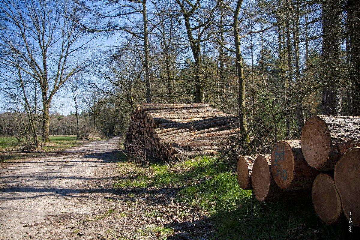 Pelt... #Belgium #Overpelt #Bosland #MobilePhonePhotography #MobilePhoto #NaturePhoto #Spring #Hikingpic.twitter.com/IA6n1zT46R