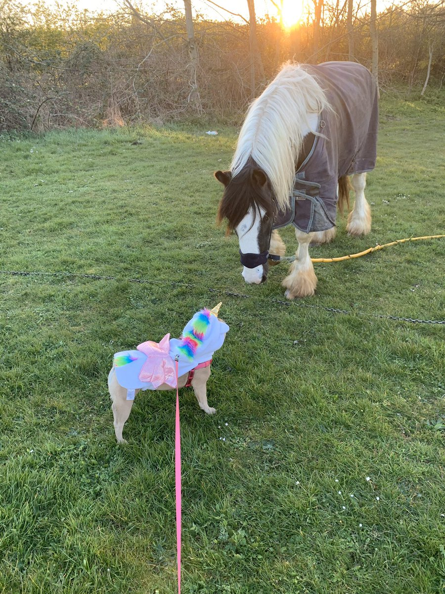 When the  meet the  #cute #SocialDistancing #horsey #frenchie #walkies #timeout pic.twitter.com/9WyH0ENrQU