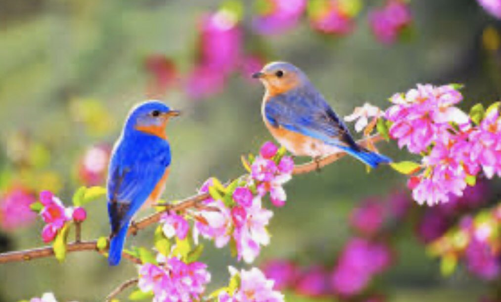 It's individually wrapped Bubbles of Heaven Where God is within All Our Love is Eternal  Free   The bluebirds have Become my heart Chirping joy on Branches and me   #5D #JoyTrain #celestialpoems #nature #micropoetry #Love #Heaven #Earth Wallpapermaniapic.twitter.com/IaBFBRdZFD