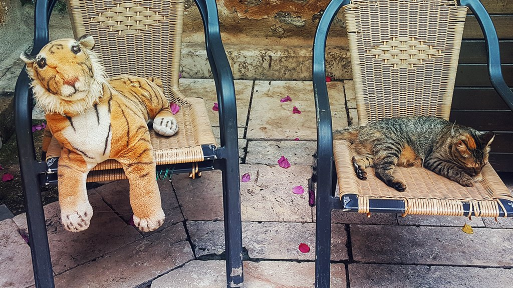 As we all found out last weekend, big cats = big problems. But for house kitties, pet insurance can help ensure your life is relatively drama-free. http://spr.ly/60161a4Oo