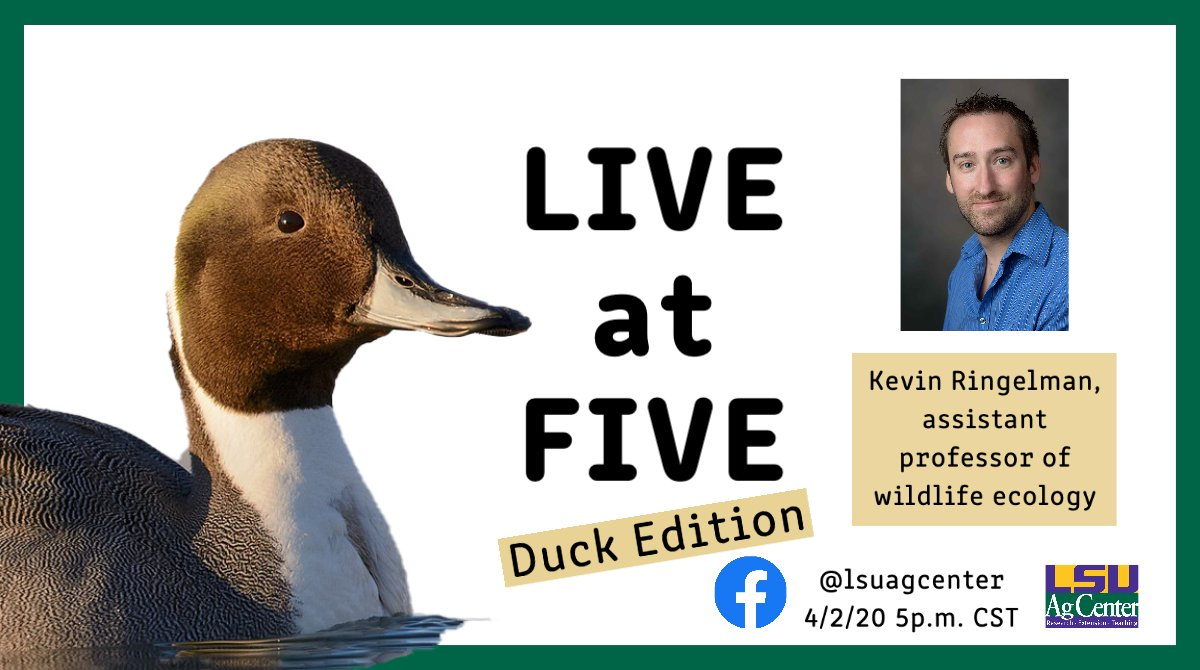 I'll be doing a live Q&A on all things ducks this Thursday on the @LSUAgCenter Facebook page