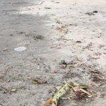 相模湾浜辺に見たことがないものがうち上げられていた!イカ?