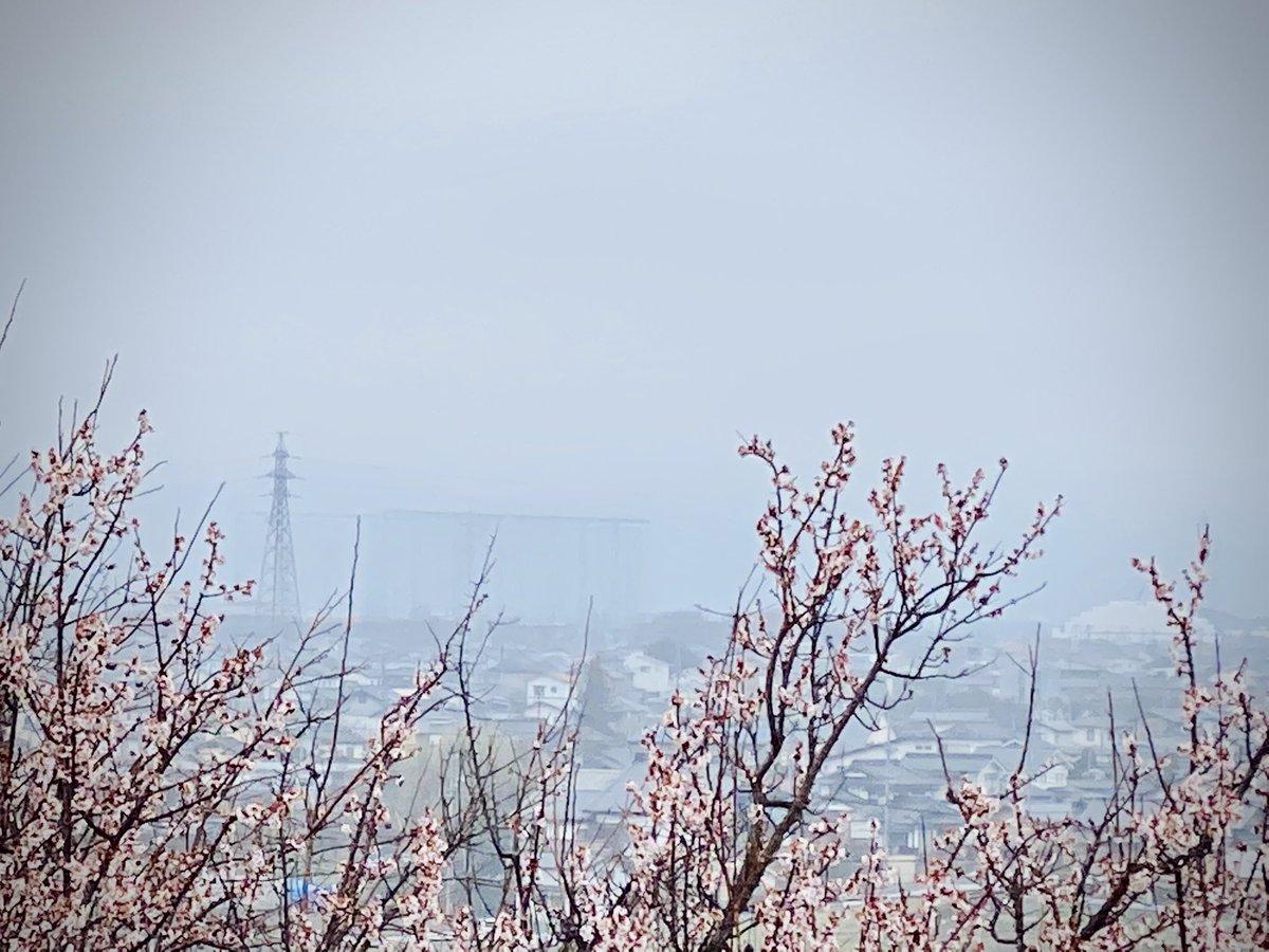 #いまそら #鉄塔 #梅pic.twitter.com/Uku4wz5zav