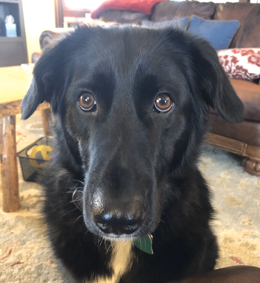 """Discovered that Harley the Dog likes Tostitos """"Hint of Lime"""" chips and honey roasted peanuts while sheltering at home. So he's winning#bestdogever pic.twitter.com/gLCW3LNMkN"""