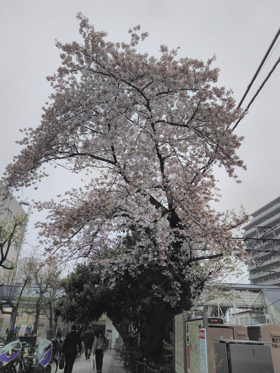 今朝の中板橋駅 #桜 #さくら #板橋 #中板橋 #中板橋駅pic.twitter.com/Vope33wylB
