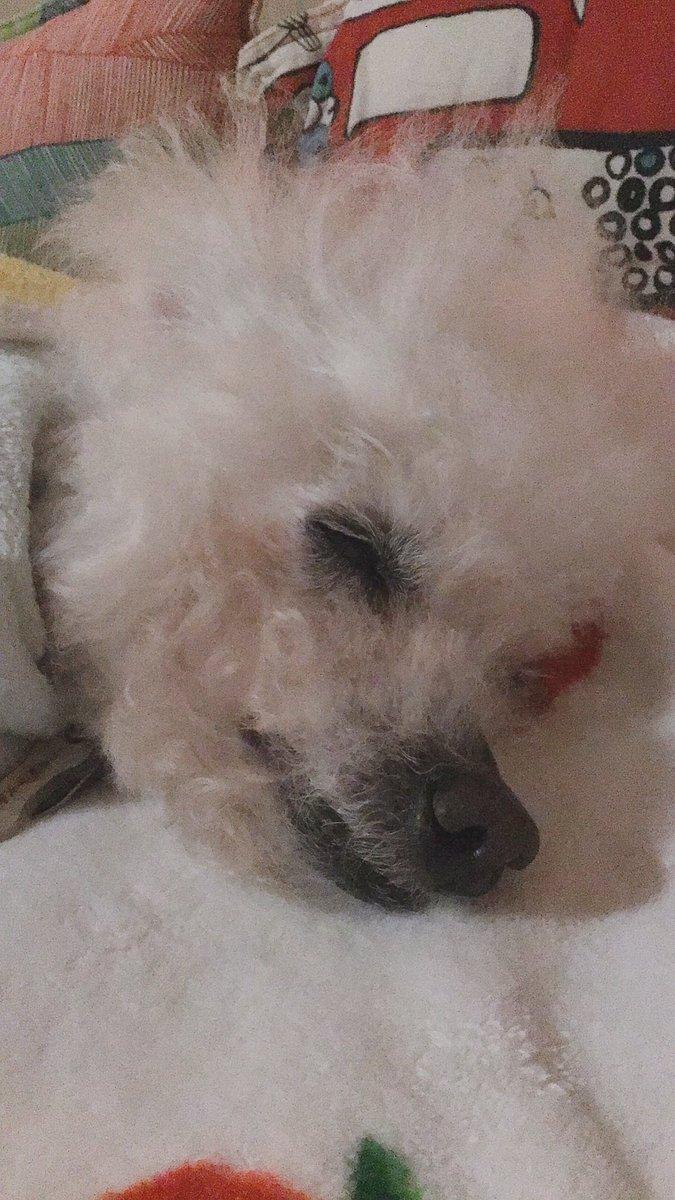 今日は眠た〜い日ですね どろどろに眠そうです  気圧が急降下するから ぼんやりデーになりそう 頑張れくんちゃん明日は晴れよ #秘密結社老犬倶楽部 #老犬介護 pic.twitter.com/QLHZfBWPGj