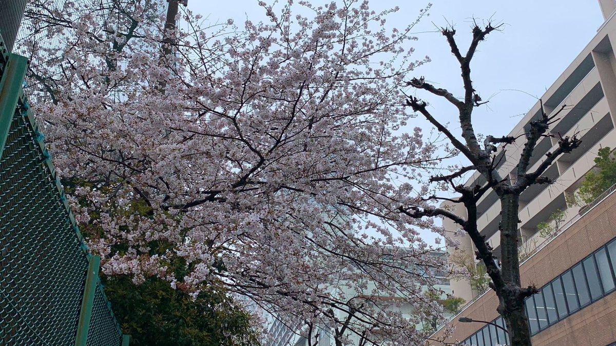 おはようございます  今日から4月ですが、雨で寒いですね  今月も元気にいきましょう  #桜 #お花見 #いまそら #空のある風景 #おは戦20401aspic.twitter.com/QOETfkGkBE