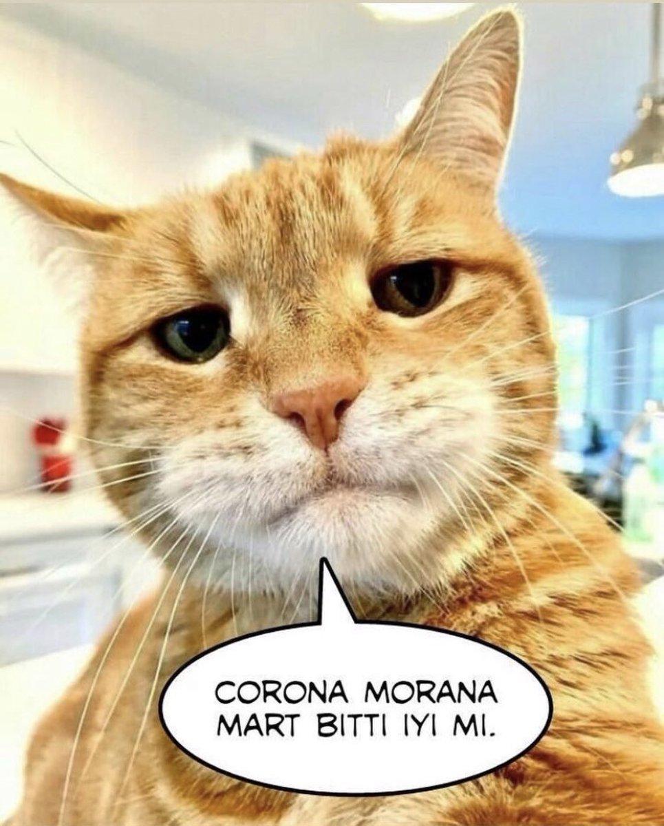 İsyankar kedi . . #car #kedi #mart #march #animal #animals #corona #korona #turkey #türkiye #coronaturkiye #coronavirüsü #komedi #çiftleşme #üreme #instadaily #instaphoto #photography #photographer #geography #likeforfollowpic.twitter.com/AOeuSTOyGk
