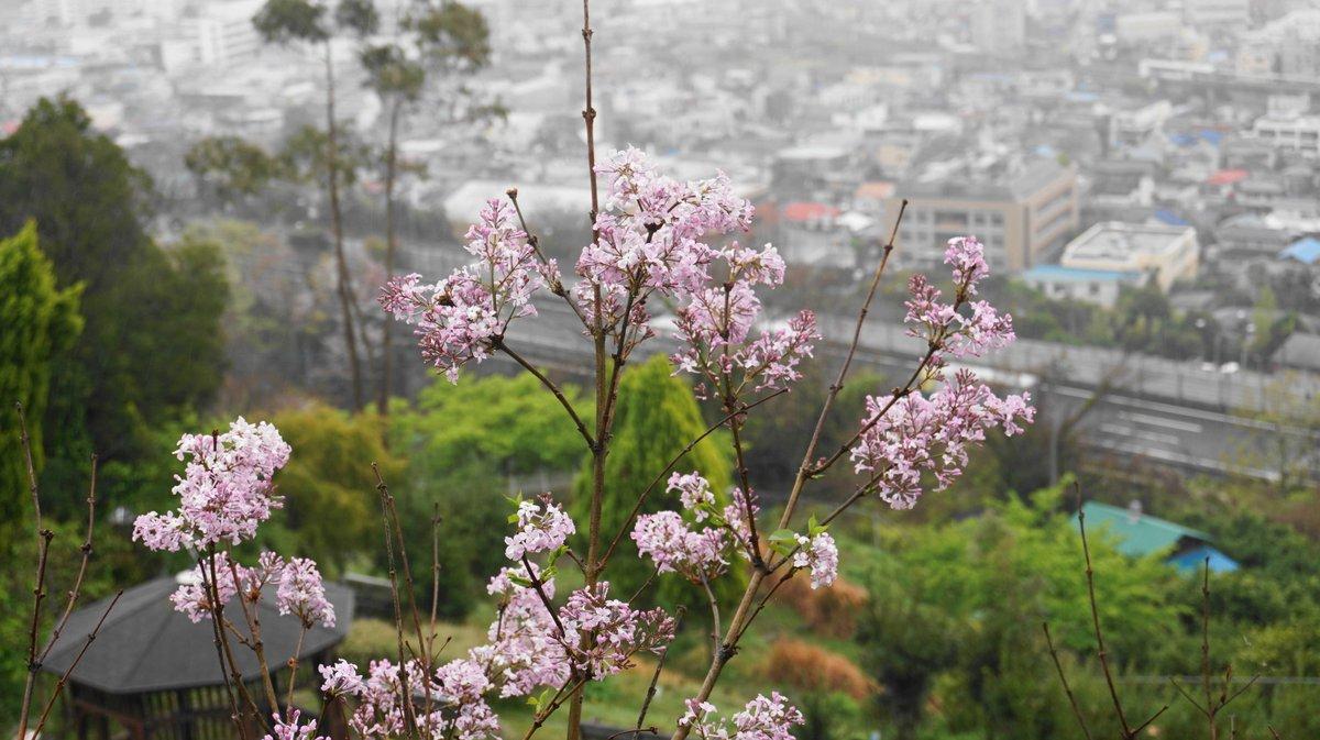 おはようございます。あいにくの雨ですがガーデンの花が咲き始めています。 #西平畑公園 #松田山ハーブガーデン #松田町 #観光 #ブランコ #あしがら #足柄 https://nisihira-park.orgpic.twitter.com/qWPolPm4VK