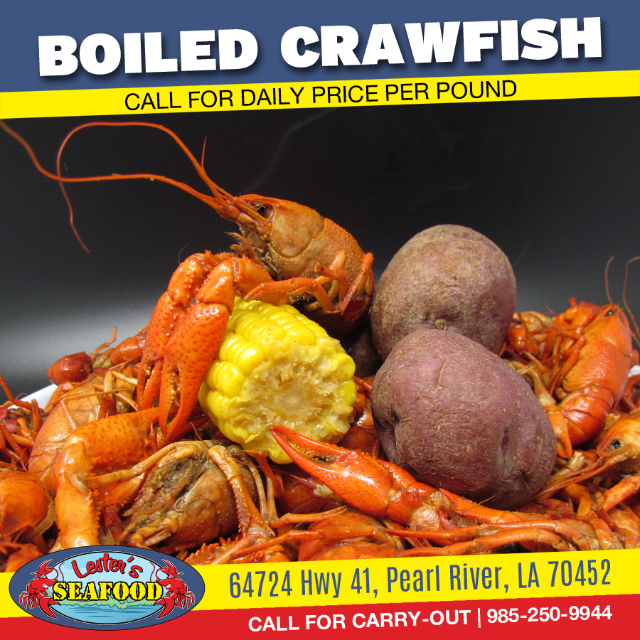 BOILED CRAWFISH are back at #LestersSeafood !!!! We're serving our award-winning, perfectly seasoned #Crawfish by the pound every day! Call for our daily price per pound (985) 250-9944 #Seafood #PearlRiver <br>http://pic.twitter.com/nGdQtk62c7