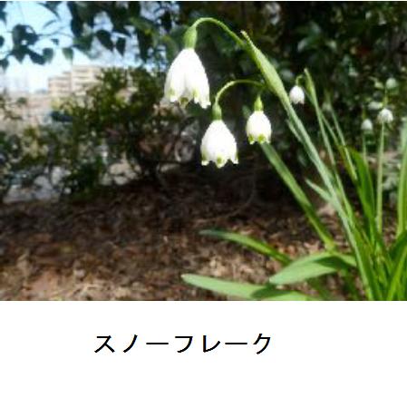 エコポリスセンターです! かんきょう観察地域自主活動グループ見次の会「みつぎ便り163号」をホームページに更新しました。  http://ow.ly/NMIy50z1Dt2 #板橋区 #板橋 #itabashi #見次公園 #みつぎ便りpic.twitter.com/qEvpT2uHus
