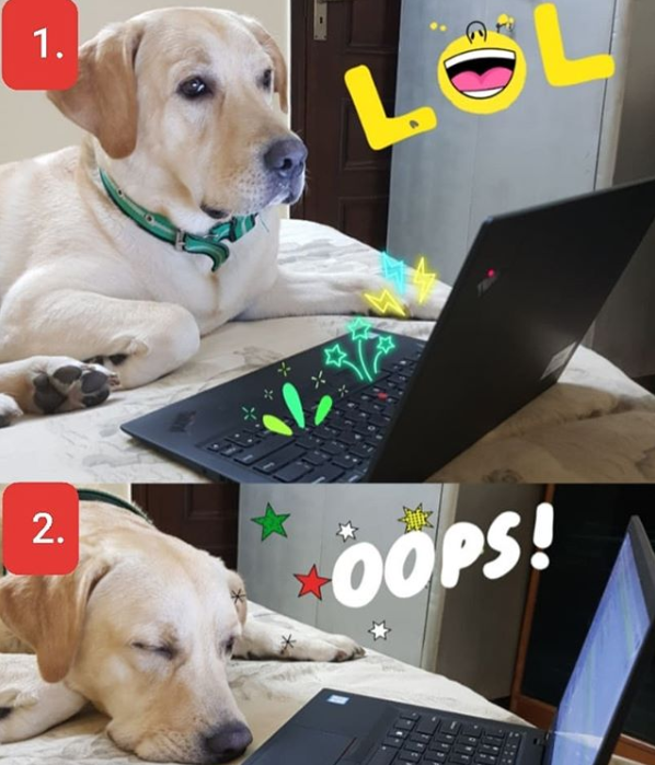 @i_am_max_the_labra 1. Me working from home @ 9:00 AM  2 Me workng from home @ 9:07 AM#dogsworkingfromhome #quarantimewithpetpic.twitter.com/MG59K3jyPr