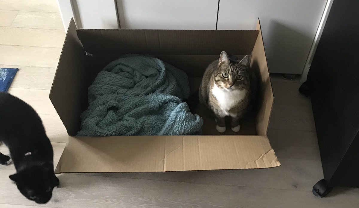 I don't know who needs to see this but this is my cat in a box.   Also rent is due tomorrow and neither the federal gov nor our governor have suspended rent! Keep calling and leaving VMs. Shame on @NYGovCuomo.
