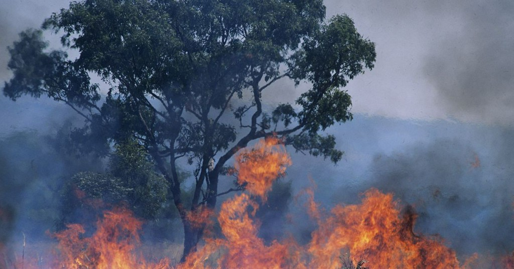 Australia's historic bushfires could impact the world's biodiversity forever popsci.com/story/science/…